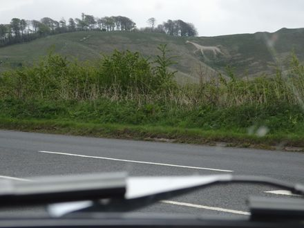 The white horse, racing against the Morgan!