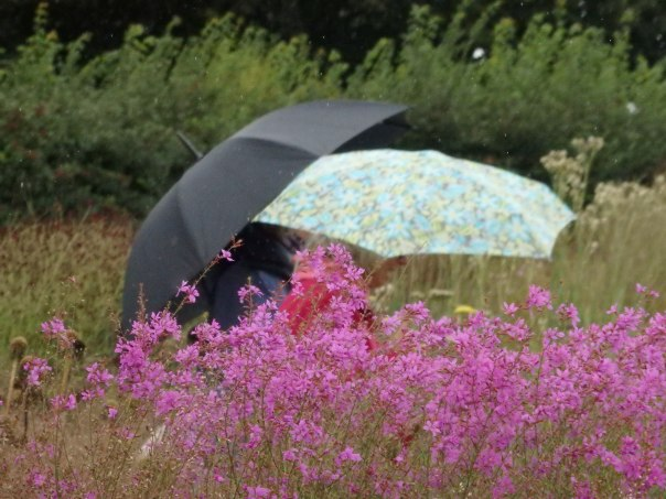 Horticultural exchanges beneath the brollies.